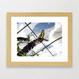 Malachite Butterfly Framed Art Print