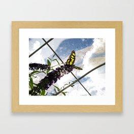 Malachite Butterfly Framed Art Print