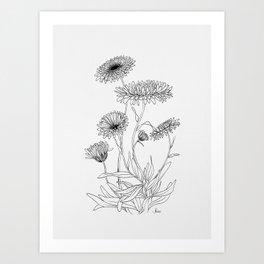 Calendula Flowers Art Print