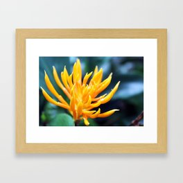 Yellow and Spikey Framed Art Print