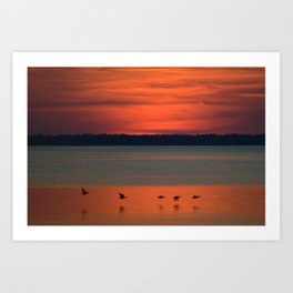 A flock of geese flying north across the calm evening waters of the bay Art Print