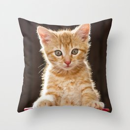 Play Time Kitten  Throw Pillow