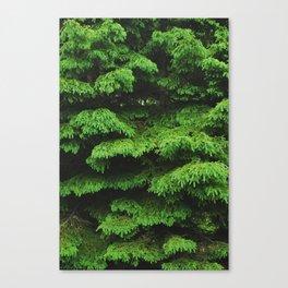 Greenery I Canvas Print