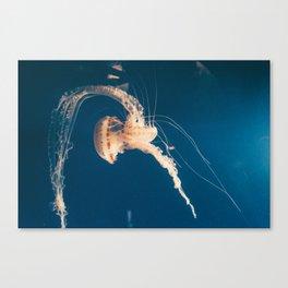 Dancing Jellyfish Canvas Print