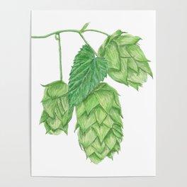 Beer Hop Flowers Poster