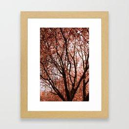 Spring Bloom Framed Art Print