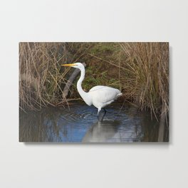 Just Right (Great Egret) Metal Print
