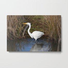 Just Right (Great Egret) Metal Print