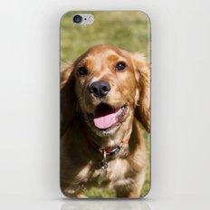 Casper the Cocker Spaniel iPhone & iPod Skin