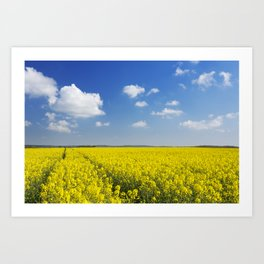 Path through blooming canola under a blue sky with clouds Art Print
