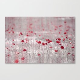 Poppies in Roma Canvas Print