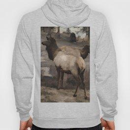 Young Elk Bucks   -  Banff Alberta Hoody