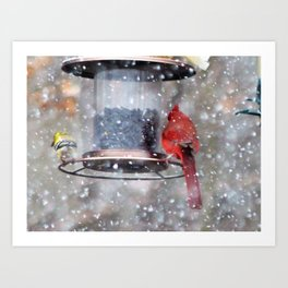 Goldfinch and Cardinal at Feeder Art Print