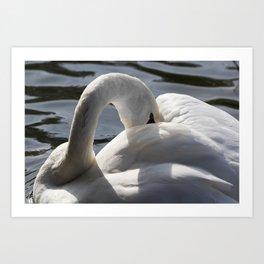 Swan Peace Art Print