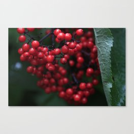 fruitful bounty Canvas Print