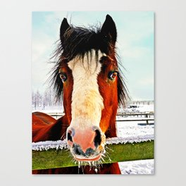 Snowy Whiskers Canvas Print