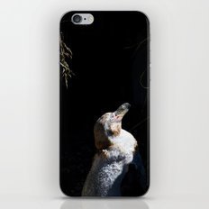 Spheniscus Humboldti III iPhone & iPod Skin