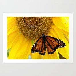 Monarch and Sunflower Art Print