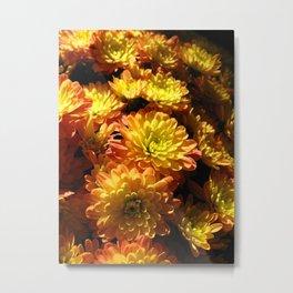 Fall Chrysanthemums Metal Print