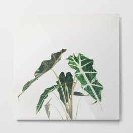 Elephant Ear Metal Print