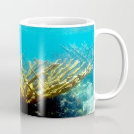 Watercolor Sealife, Elkhorn Coral 01, St John, USVI, Watch Your Step! Coffee Mug