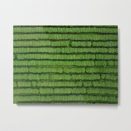 An aerial shot of a tea plantation field in the Northern Thailand Metal Print
