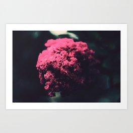 Flower... Art Print
