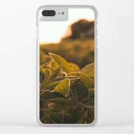 Soybean sunset Clear iPhone Case