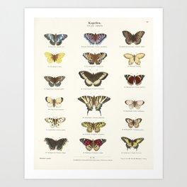 Vintage Butterfly Chart Art Print