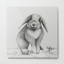 Lop eared bunny rabbit Metal Print