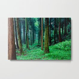 Tree forest Metal Print