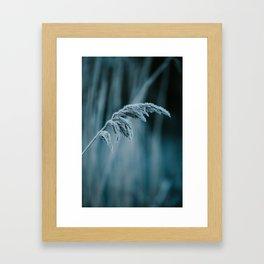 Frosted Grass II Framed Art Print
