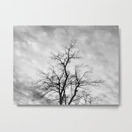 Tree, Greenville, Mississippi (Black & White) Metal Print