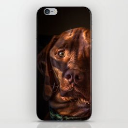 Izaak the Vizsla iPhone Skin