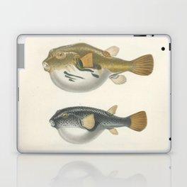 Naturalist Pufferfish Laptop & iPad Skin