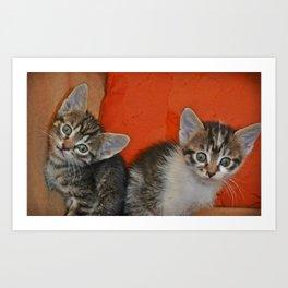 Funny kittens 2 Art Print