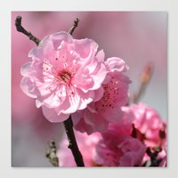 cherry blossoms Canvas Prints featuring Cherry Blossoms by Zen and Chic