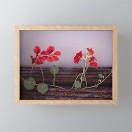 Nasturtium Framed Mini Art Print