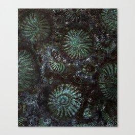 Ammonites and Trilobites Canvas Print