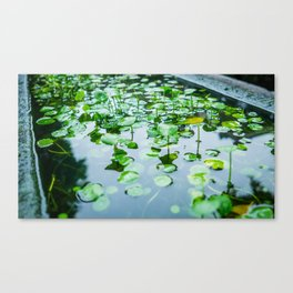 Leaf Reflections Canvas Print