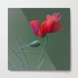 Red Poppy Dance #decor #society6 Metal Print