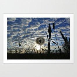 Dandilion Sunrise  Art Print