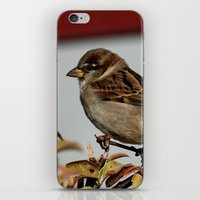 sparrow iPhone & iPod Skins featuring Sparrow by IowaShots