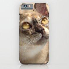Study of a Cat Slim Case iPhone 6s