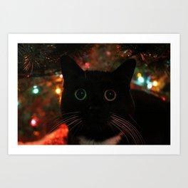 Bokeh Kitty Photo Art Print