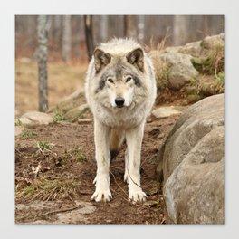 Woodland Wolf Canvas Print