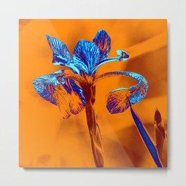 Glowing Iris... Metal Print