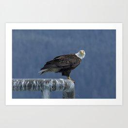 Bald Eagle of Resurrection Bay, No. 2 Art Print