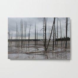 Trees in Sulfur Springs Metal Print