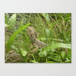 LOST IN THE GRASS Canvas Print